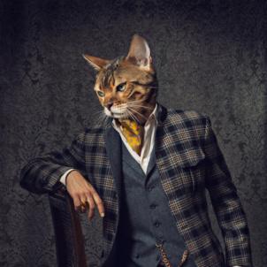 Kleider machen Katzen