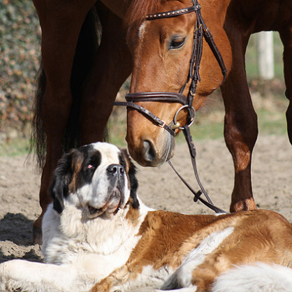 Active in animal welfare