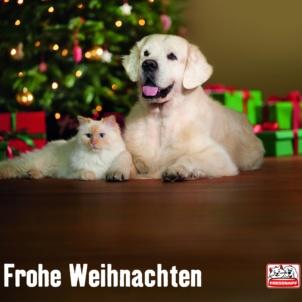 Animalisticly contemplative festive season