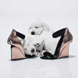 Puppies cuddle up with HighHeels