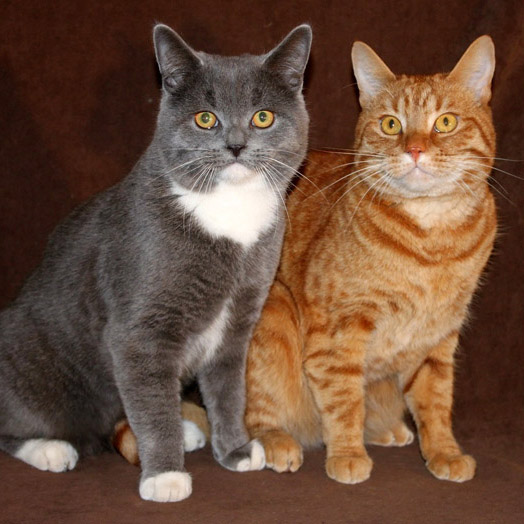Hauskatzen Winfried und Rocky