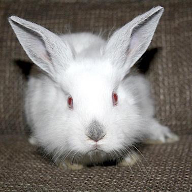 Kaninchen Winnie