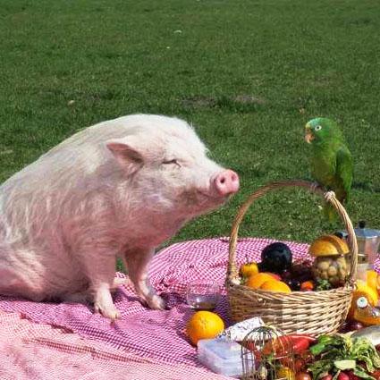 Minischwein Smarty